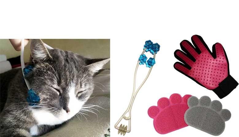 Hygiène et Bien-être de votre chat